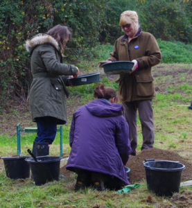Carefully sieving the soil